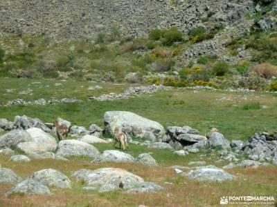 Laguna Grande,Garganta Gredos;sierra mágina viajes madrid refugio pineta cordillera subbetica sende